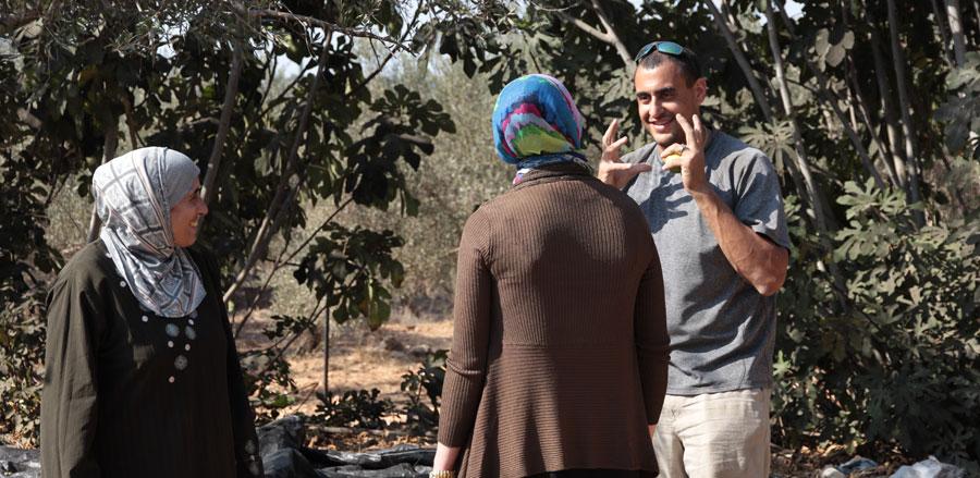 oliveharvest5.jpg