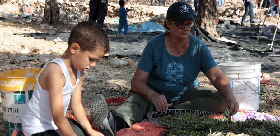 oliveharvest7.jpg
