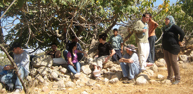 oliveharvest2.jpg